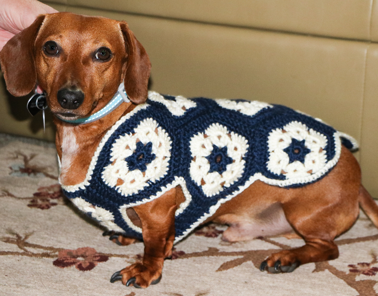 Dachshund Jumper Knitting Pattern 25 Beautiful Crochet Dog Sweater Pattern The Funky Stitch