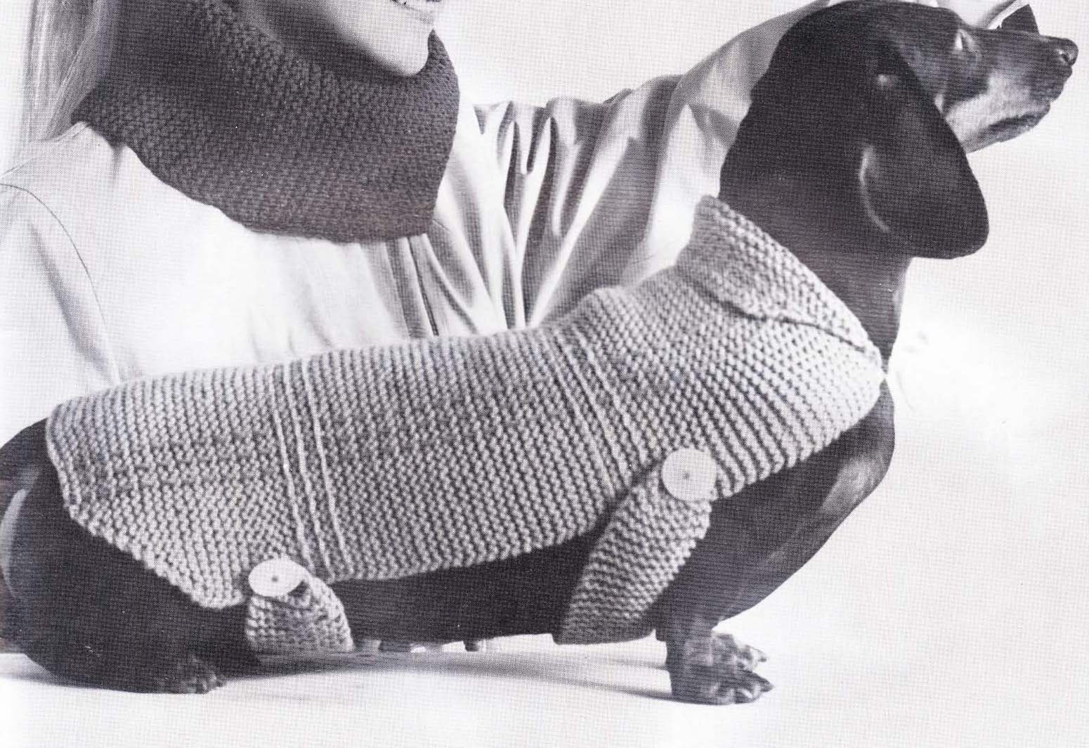 Dachshund Jumper Knitting Pattern Dachshund Crochet Pattern Crochet And Knitting Patterns