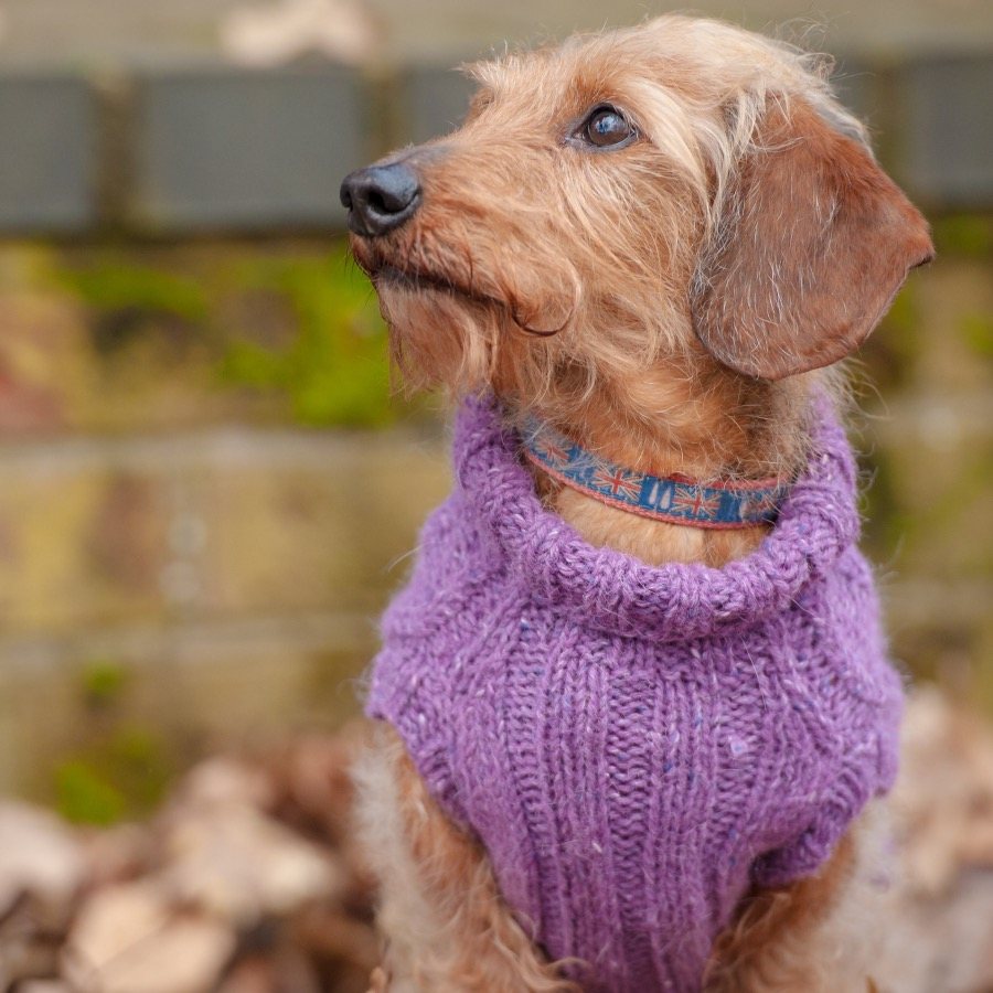 Dachshund Jumper Knitting Pattern Dogs In Jumpers Book 12 Practical Knitting Projects