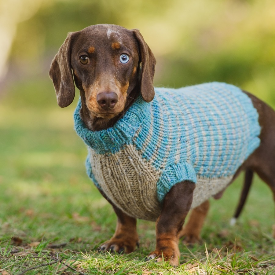 Dachshund Jumper Knitting Pattern Redhound For Dogs Knitting Kit Dashing Dachshund Was 2595