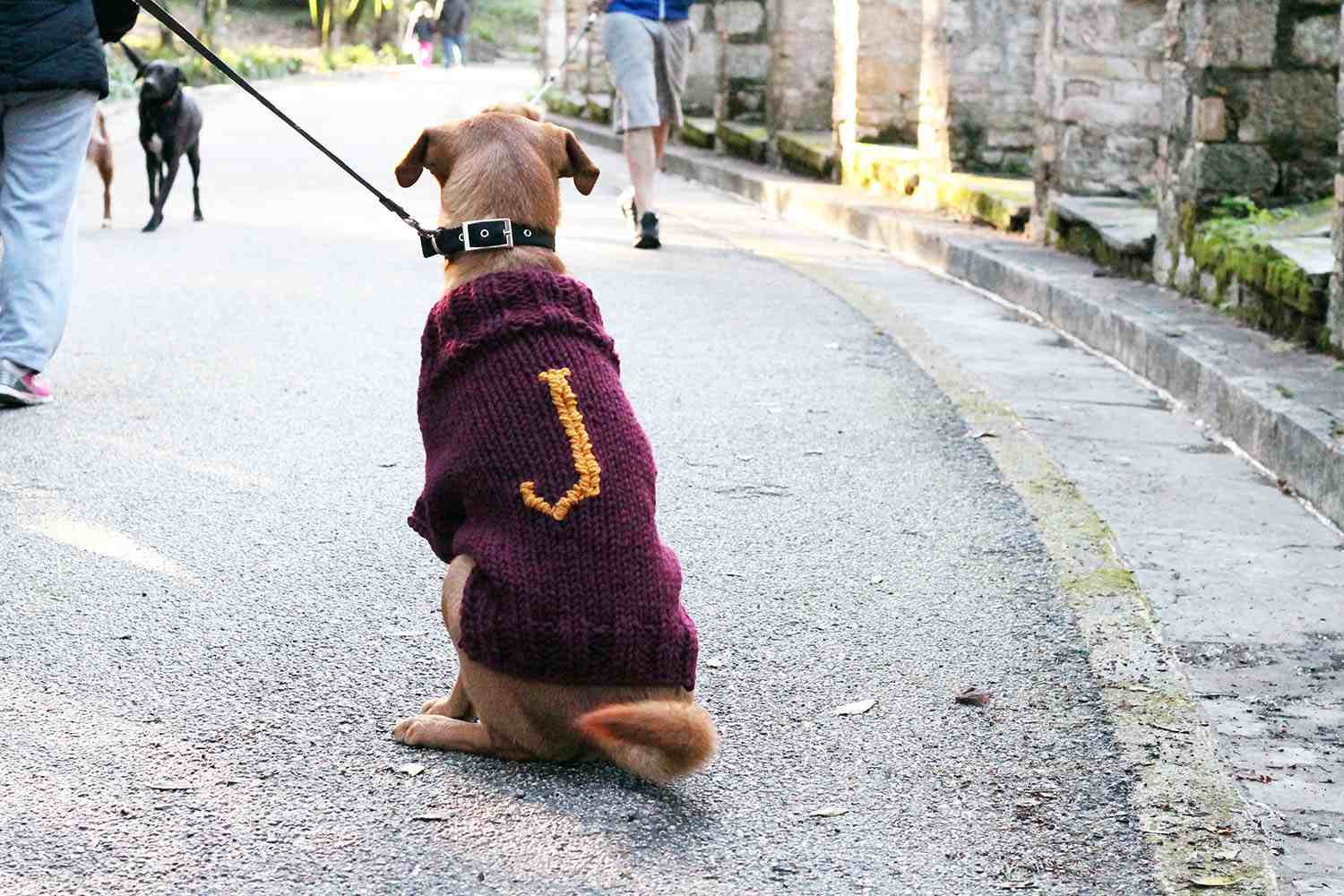 Dog Sweater Knitting Pattern 12 Dog Sweaters And Other Knitting Patterns For Pups