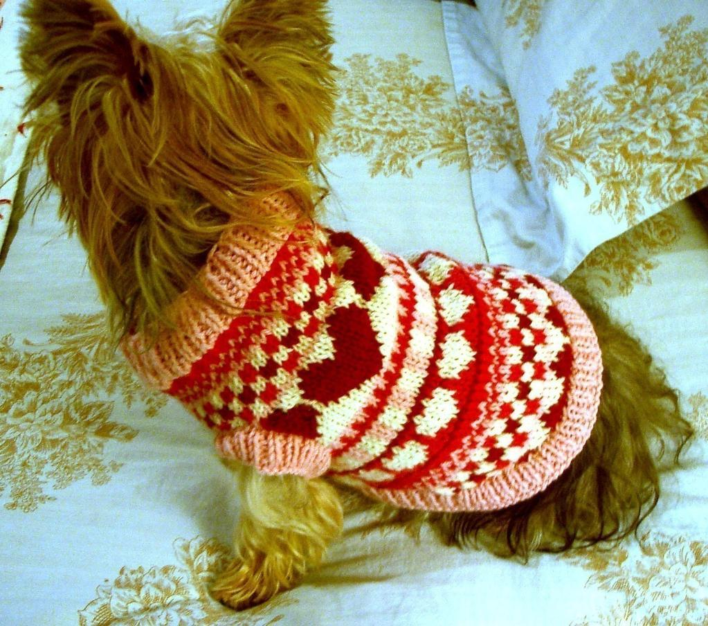 Dog Sweater Knitting Patterns 5 Pet Knitting Patterns For Furry Friends