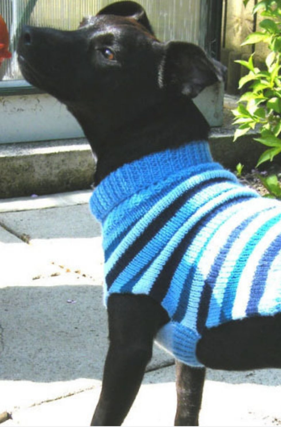 Dog Sweater Knitting Patterns Dog Sweater Pattern Free Knitting Patterns Handy Little Me