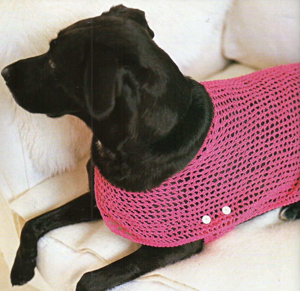 Dog Sweater Knitting Patterns Hunter Urban Dog Sweater Knit Sweaters Knitted Patterns For Large