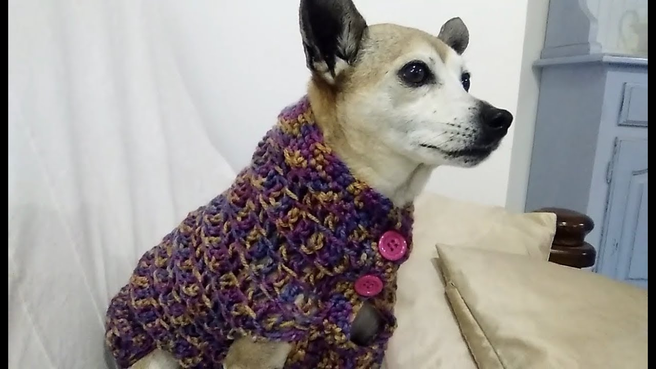 Dog Sweater Knitting Patterns Knitting Patterns For Min Pin Dog Sweaters