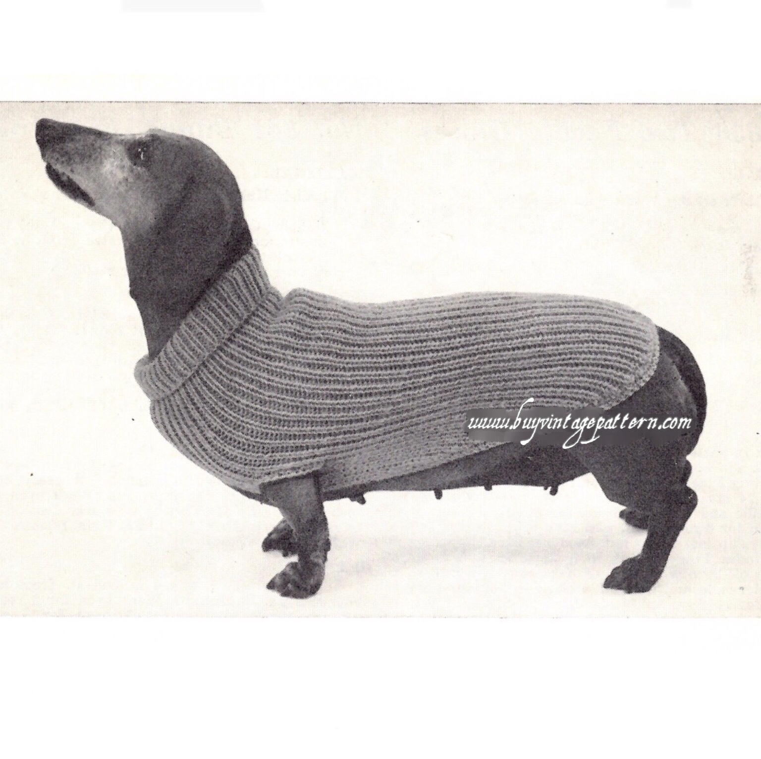 Dog Sweater Knitting Patterns Vintage Dog Sweater Knit Pdf Pattern