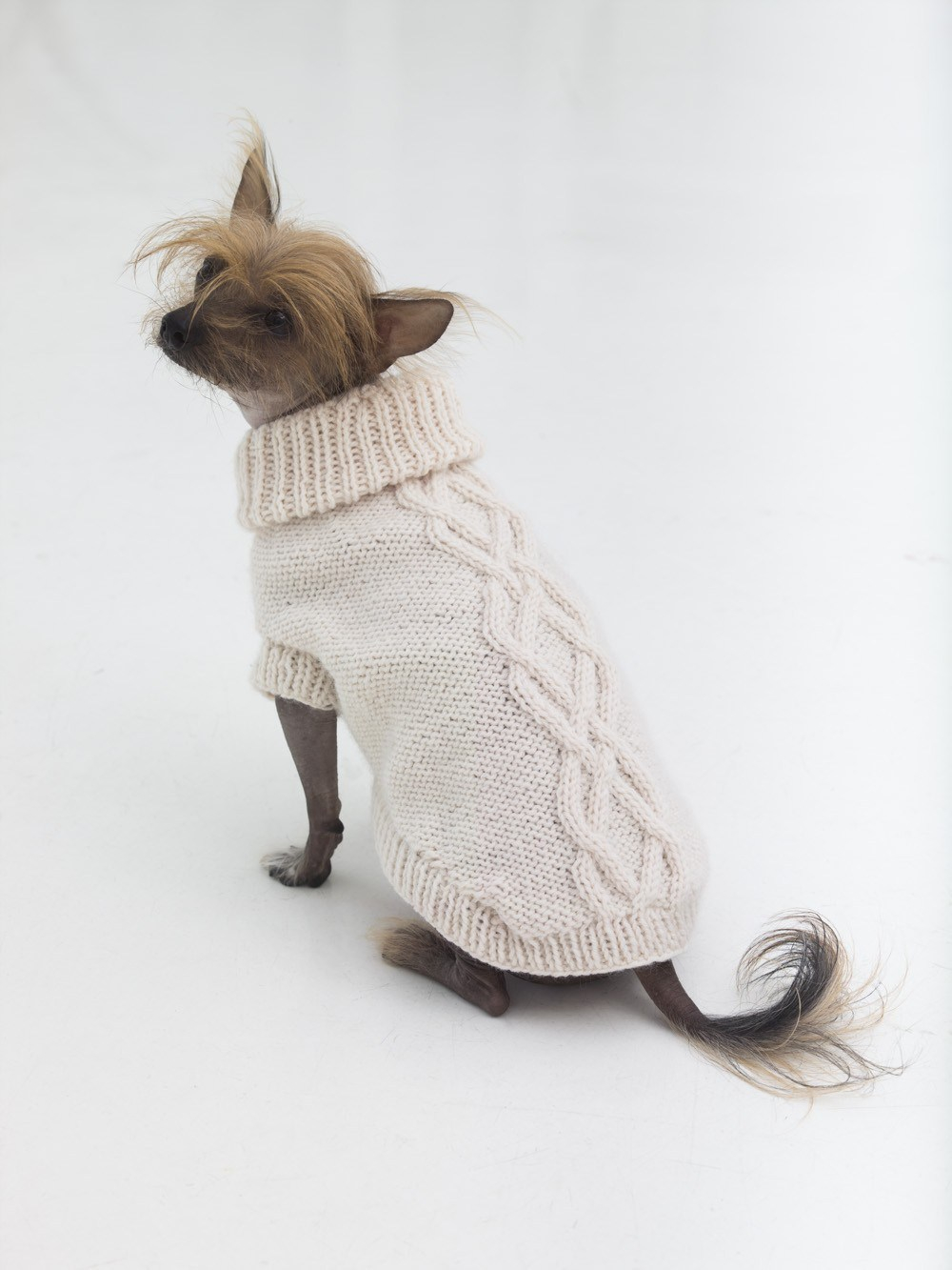 Easy Knitting Pattern For Dog Coat 10 Stunning Examples Of Beautiful Fall Dog Sweaters Free Knitting