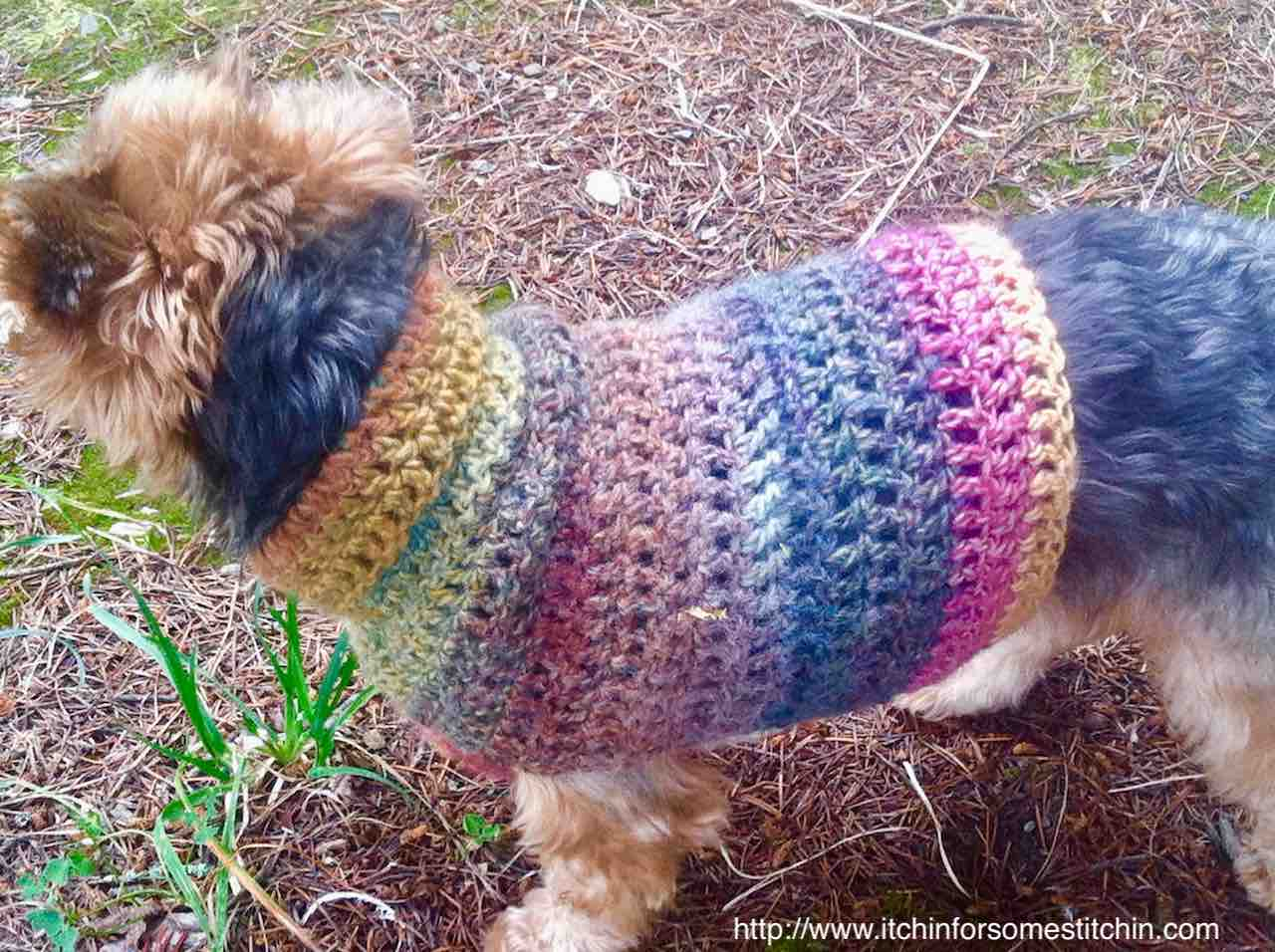 Easy Knitting Pattern For Dog Coat Quick Easy Small Dog Crochet Sweater Itchin For Some Stitchin