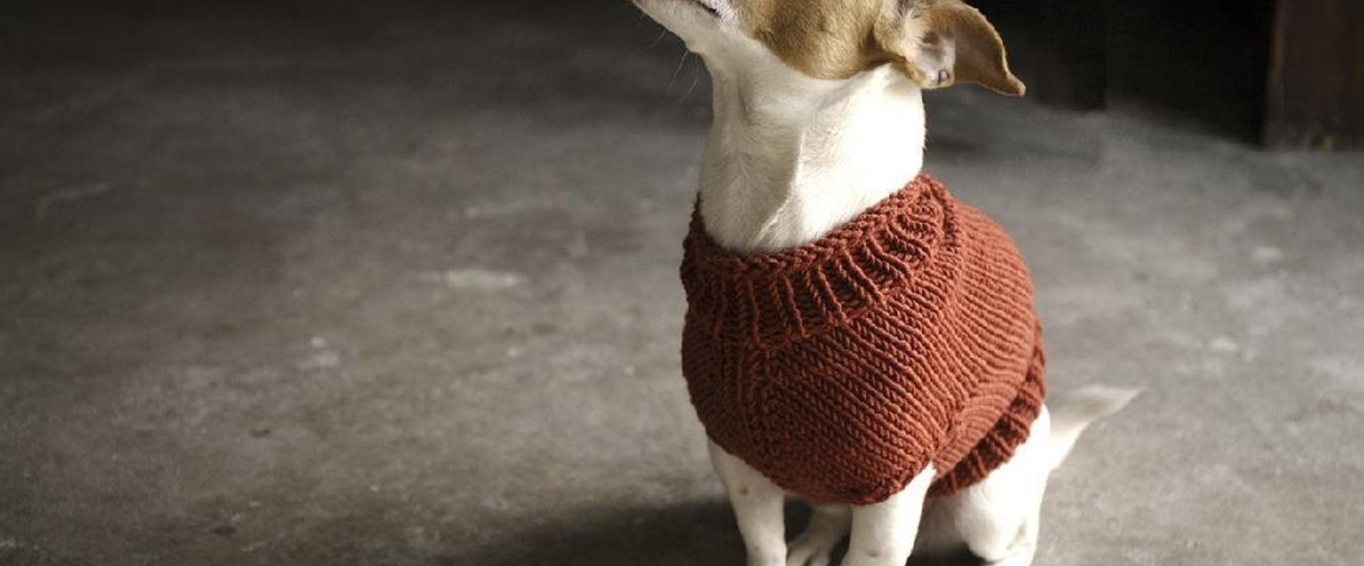 Easy Knitting Pattern For Dog Coat Top 5 Free Dog Sweater Knitting Patterns Lovecrafts