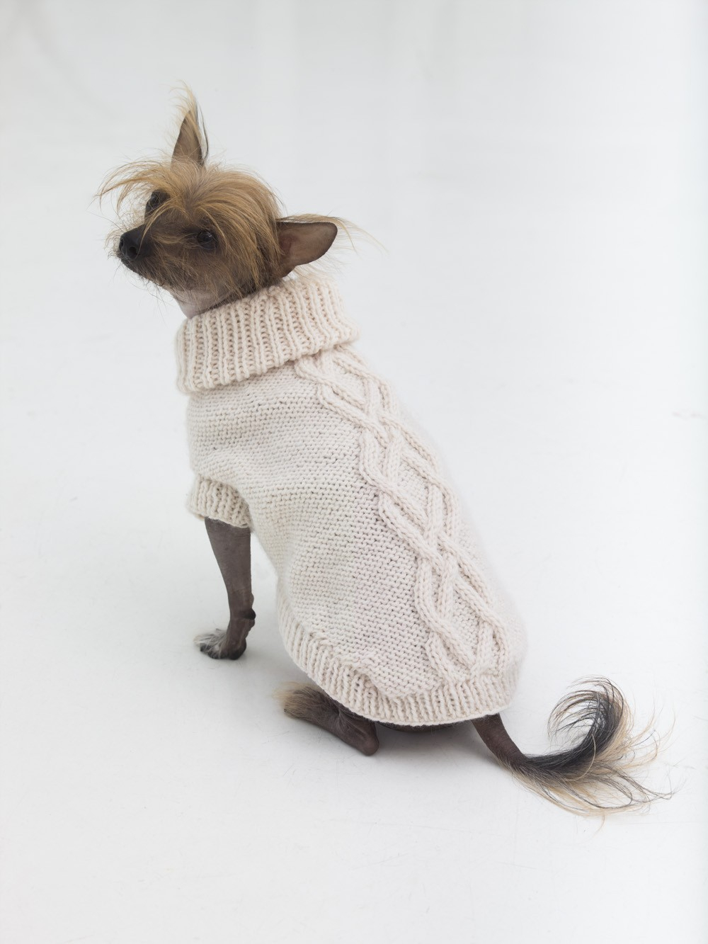 Free Knitting Patterns For Sweater Coats Free Dog Dress Pattern Tags Knitting Patterns For Dog Coats Small