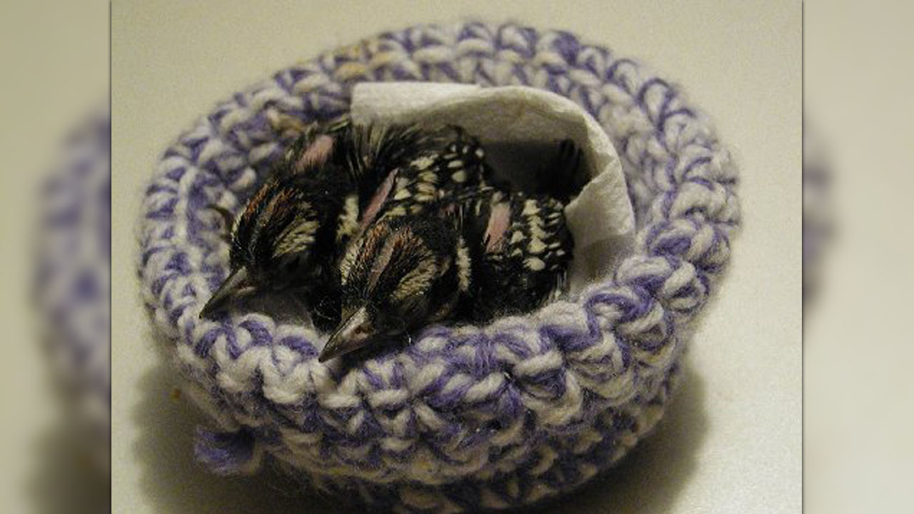 Knitted Bird Pattern Calling All Knitters Nc Rescue Group Needs Homemade Nests For Ba