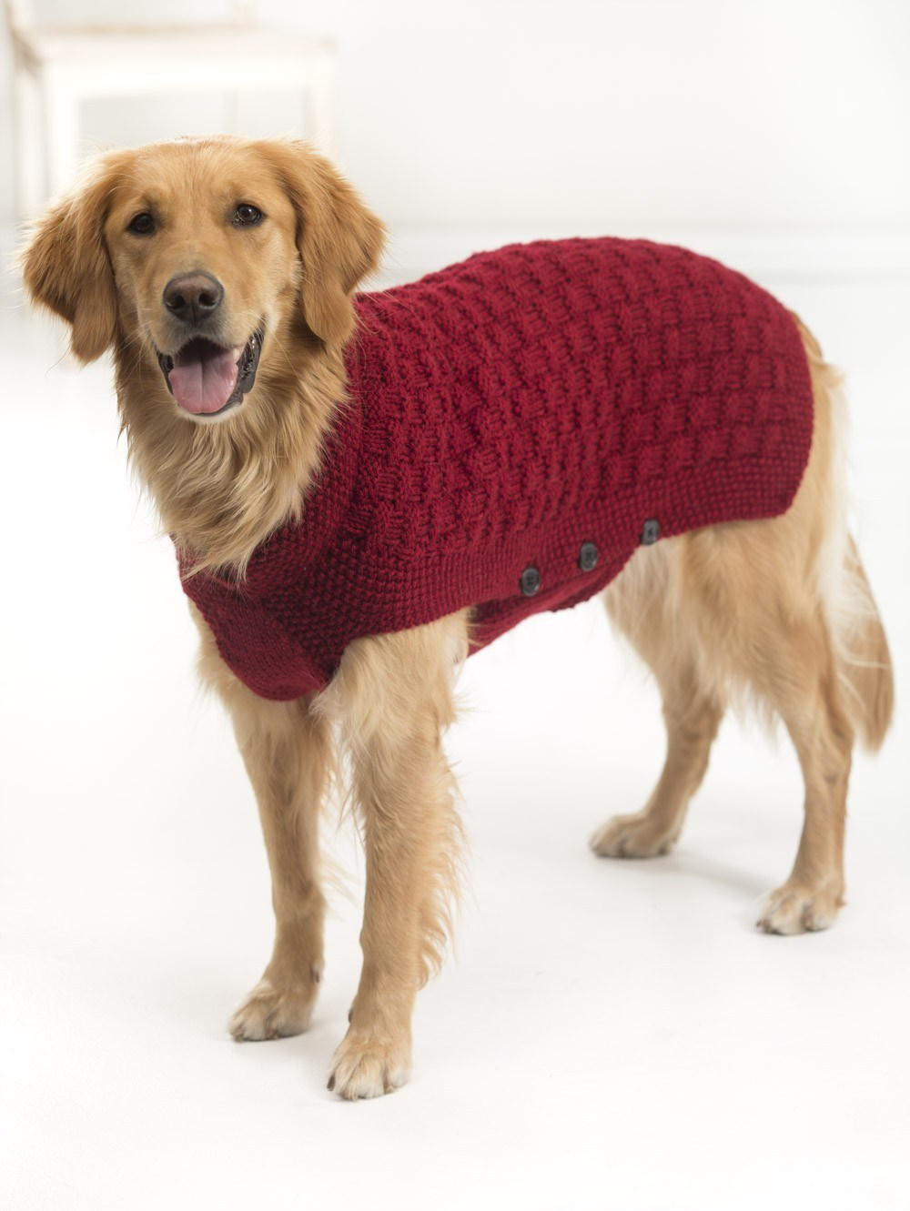Knitted Dog Coat Pattern 10 Stunning Examples Of Beautiful Fall Dog Sweaters Free Knitting