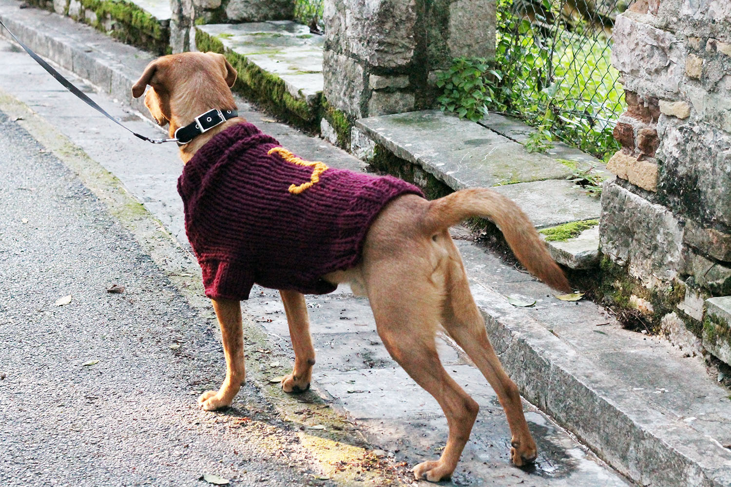 Knitted Dog Coat Pattern 19 Dog Sweater And Coat Free Knitting Patterns Guide Patterns
