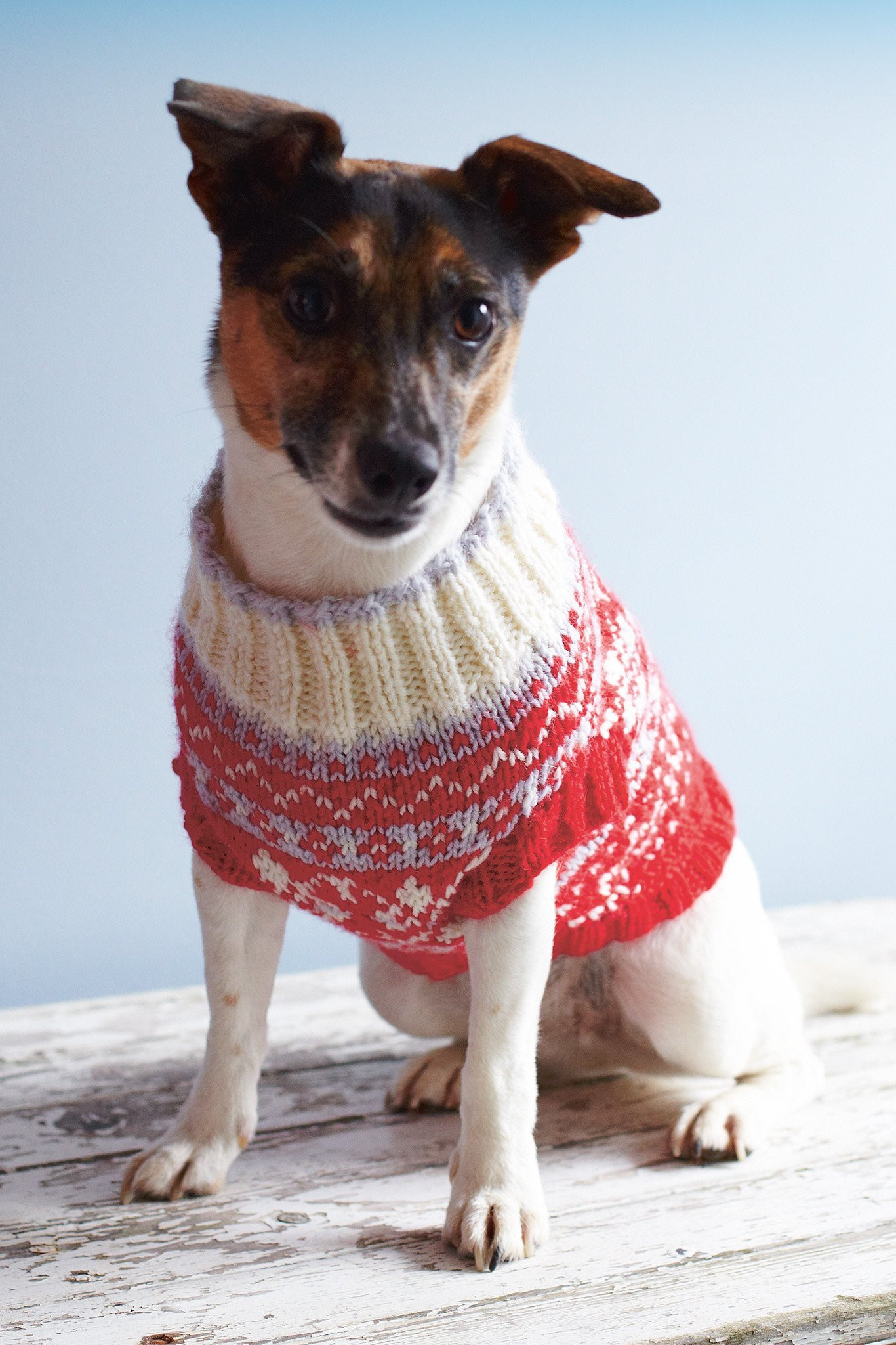 Knitted Dog Coat Pattern Dog Coat Knitting Pattern