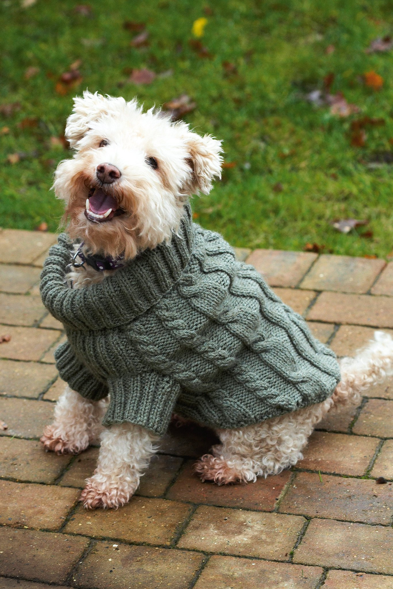 Knitted Dog Coat Pattern Dog Jumper With Cables Knitting Pattern