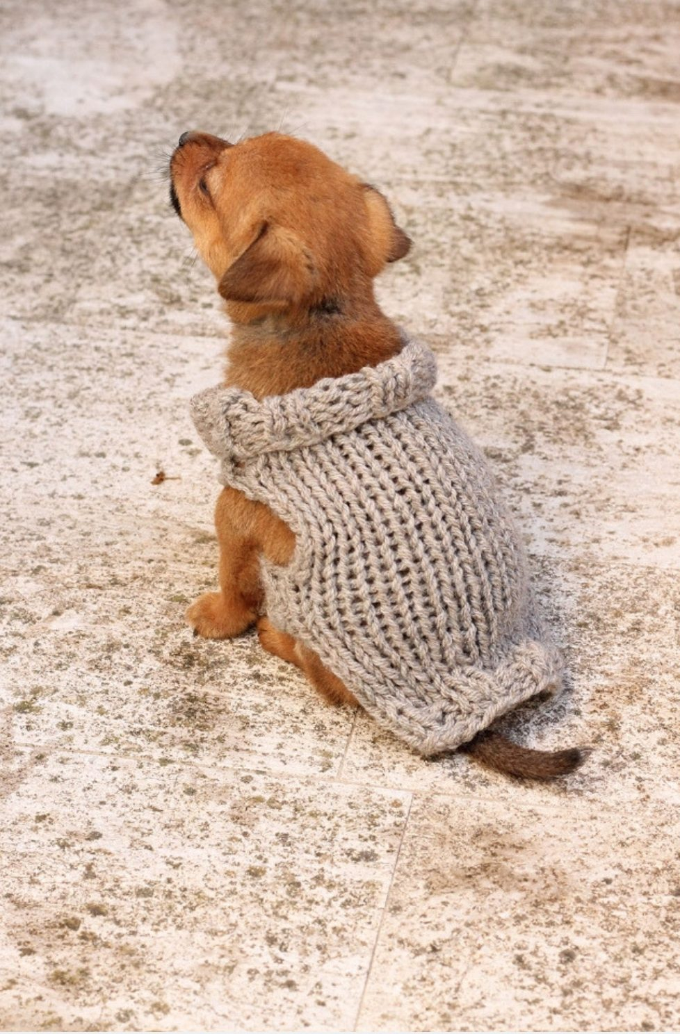 Knitted Dog Coat Pattern Puppy Sweater Knitting Pattern Free Knitting Patterns Handy