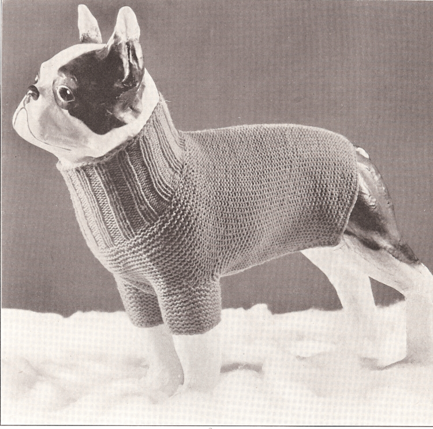 Small Dog Coat Knitting Pattern Free Vintage Antique Dog Sweater Knitted Knitting Pattern On Popscreen
